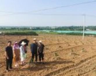当阳:柑橘品种改良验收工作扎实开展